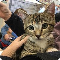Adopt A Pet :: Ranger - San Jose, CA