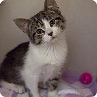 Adopt A Pet :: Sushi - Lancaster, PA