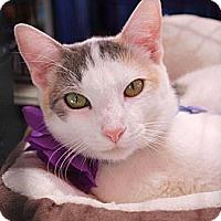 Adopt A Pet :: Abby - Irvine, CA