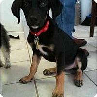 Adopt A Pet :: Reese - Arlington, TX