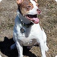 Adopt A Pet :: Happy - Lynnwood, WA