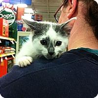 Adopt A Pet :: Mr. Moo - Pittstown, NJ