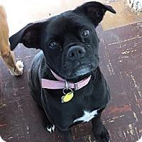 Adopt A Pet :: Binti - Scottsdale, AZ