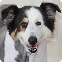 Adopt A Pet :: Madison - Norwalk, CT