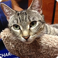 Adopt A Pet :: Ashley - Long Beach, NY