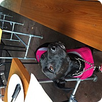 Adopt A Pet :: Heather - Broken Arrow, OK