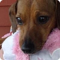 Adopt A Pet :: GABBY - Portland, OR