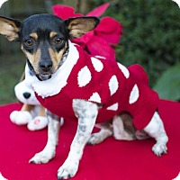 Adopt A Pet :: Sandy -Cutey---S---Video - Santa Fe, TX