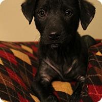 Adopt A Pet :: Clover - Sudbury, MA