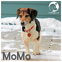 Adopt A Pet :: MoMo - Pittsburgh, PA