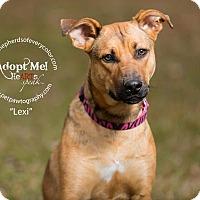 Adopt A Pet :: Lexi - Montgomery, AL