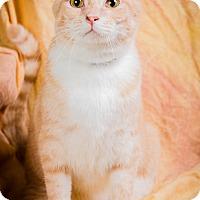 Adopt A Pet :: GABRIELLE - Anna, IL