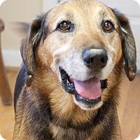 Adopt A Pet :: Eli - Homewood, AL