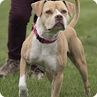 Adopt A Pet :: Odessa - Palm Springs, CA