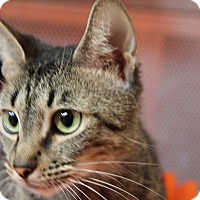 Adopt A Pet :: China - Sarasota, FL