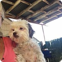 Adopt A Pet :: Dorothy - Thousand Oaks, CA