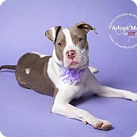 Adopt A Pet :: BABY - Higley, AZ