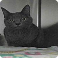 Adopt A Pet :: AVALON - Pearland, TX