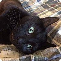 Adopt A Pet :: Martin - Frankfort, IL