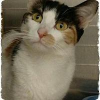 Adopt A Pet :: Berklee - Pueblo West, CO