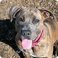 Adopt A Pet :: AMBERLYN - McKinleyville, CA