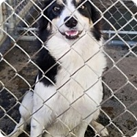 Adopt A Pet :: SNICKERS - Gustine, CA