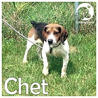 Adopt A Pet :: Chet - Chicago, IL