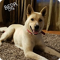 Adopt A Pet :: Xavier - Regina, SK