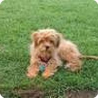 Adopt A Pet :: Ziggy - Culver City, CA