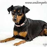 Adopt A Pet :: Kiah - Atlanta, GA