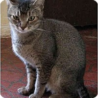 Adopt A Pet :: Kipling - Davis, CA