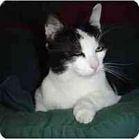 Adopt A Pet :: Sir Snuggles - Modesto, CA