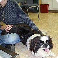 Adopt A Pet :: Bessie & Puggy - Chantilly, VA