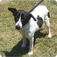 Adopt A Pet :: Rosebud - Okatie, SC