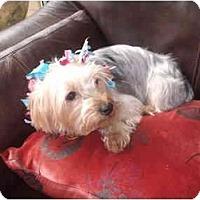 Adopt A Pet :: Trixie - Conroe, TX