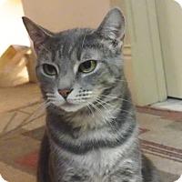 Adopt A Pet :: Olivia - Colmar, PA