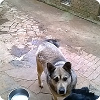 Adopt A Pet :: Diamond (Guest) - Roswell, GA
