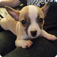 Adopt A Pet :: Dink - Glendale, AZ