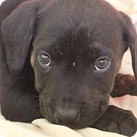 Adopt A Pet :: Astrid - Waldorf, MD