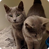 Adopt A Pet :: Pop & Pip -Adoption Pending! - Arlington, VA