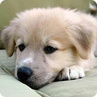 Adopt A Pet :: Stephen - Austin, TX