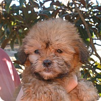 Adopt A Pet :: HEIDI - adorable! - Chicago, IL