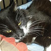 Adopt A Pet :: CHRISSY - Phoenix, AZ