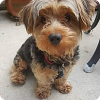 Adopt A Pet :: Teo - San Diego, CA