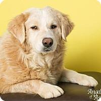 Adopt A Pet :: Earnest T. - Roanoke, VA