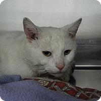 Adopt A Pet :: Dickens - Elyria, OH