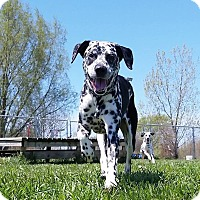 Adopt A Pet :: Cheech & Chong - Elyria, OH