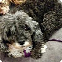 Adopt A Pet :: Alexis - Boulder, CO
