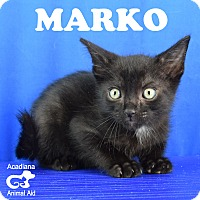 Adopt A Pet :: Marco - Carencro, LA