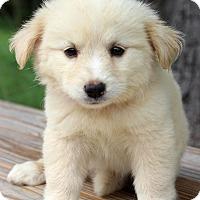 Adopt A Pet :: Irma - Waldorf, MD